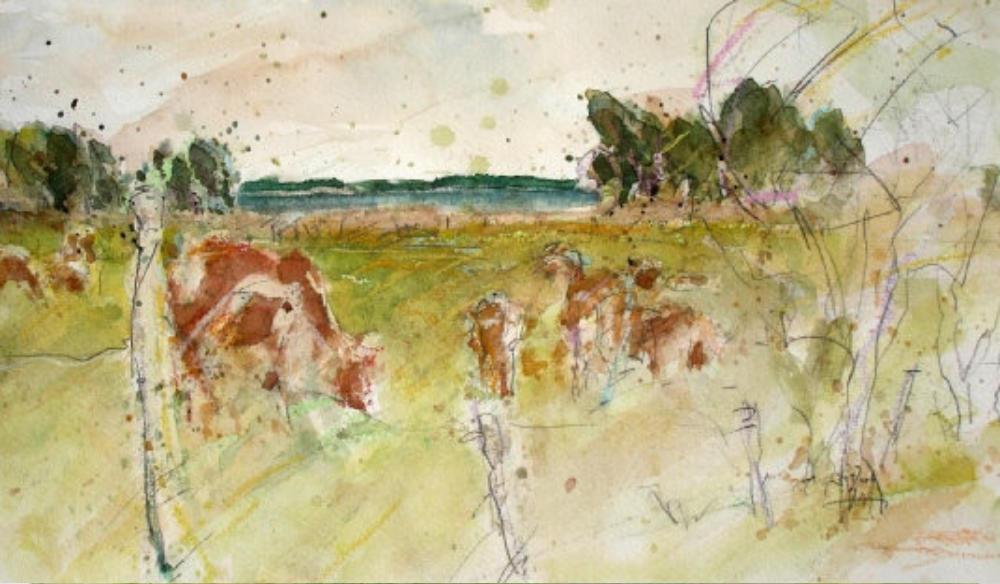 Kühe an der Müritz