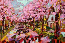 Kirschblüten am noch kühlen Morgen