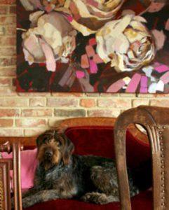 Rosen mit Hund auf Sofa